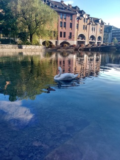 We had this swan posing for us.